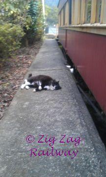 Rosie 1 by zigzagrailway