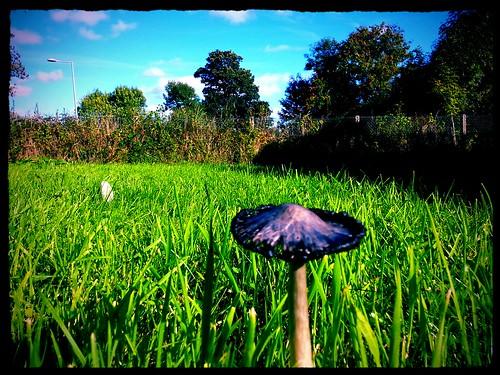 mushroom sunny clear flickrandroidapp:filter=peacock