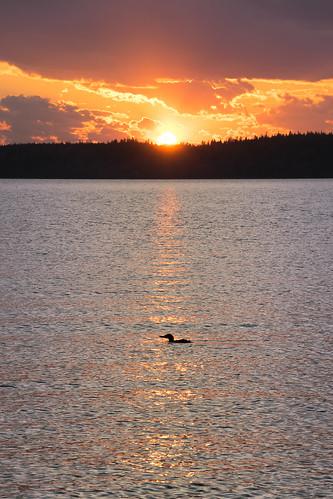new sunset cloud sun reflection water silhouette clouds river outdoors duck nikon outdoor hill brunswick newbrunswick goldenhour eveining renforth nbphoto nikond3300 d3300