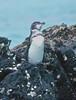 Isabela Island, Galapagos Islands by Paul A Thomas