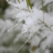 Close up on delicate snow crystals on willow leaves along South Boulder Creek.