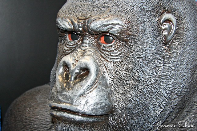 IMG_4268EN Gorillla