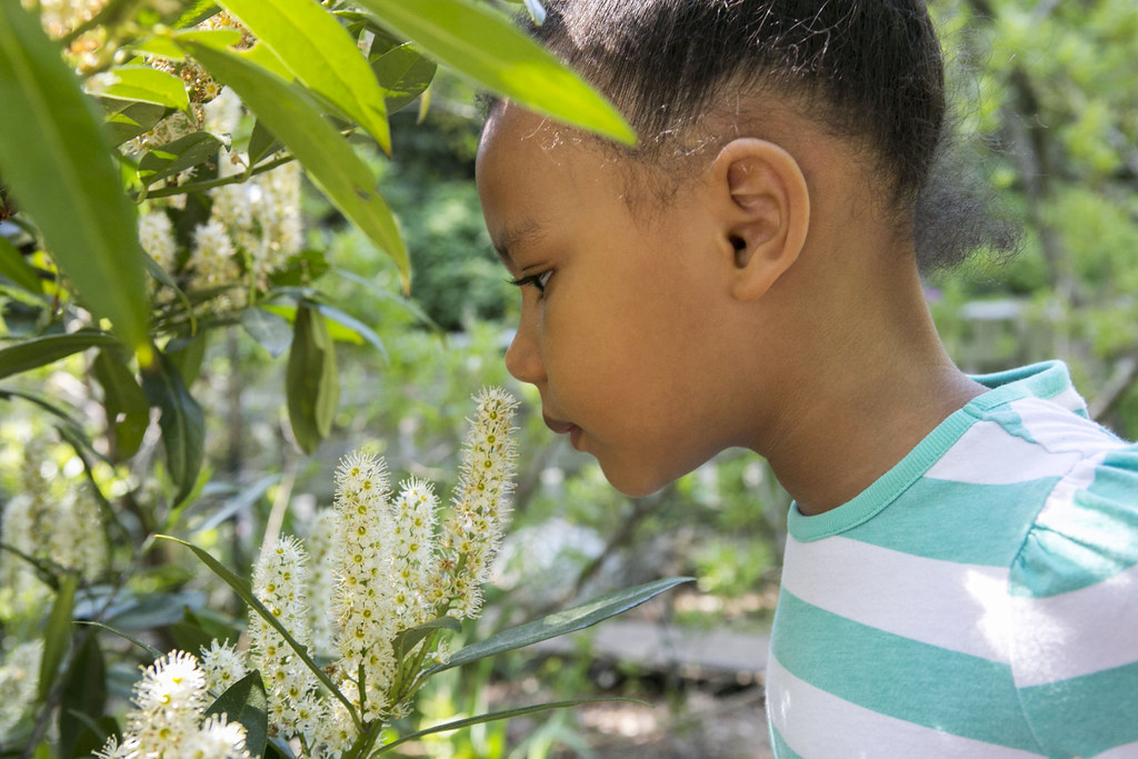 Girl smelling flowers in the Discovery Garden.