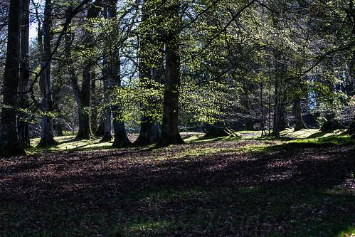 uk trees plants nature leaves scotland europe unitedkingdom places peebles borders lightshade dawyckbotanicalgardens