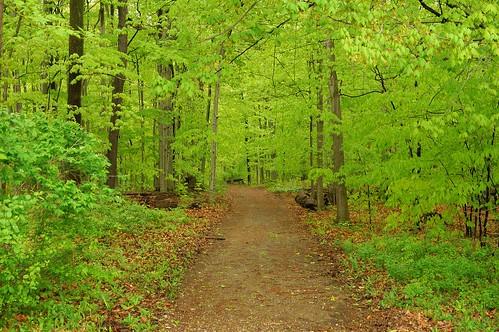 trees green woods hiking hike eastaurora rockpaper 51315 knoxfarm
