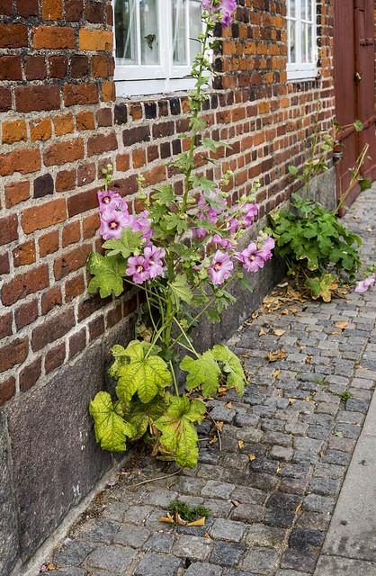 Worldwide Photowalk Copenhagen 2016 - A lonely plant