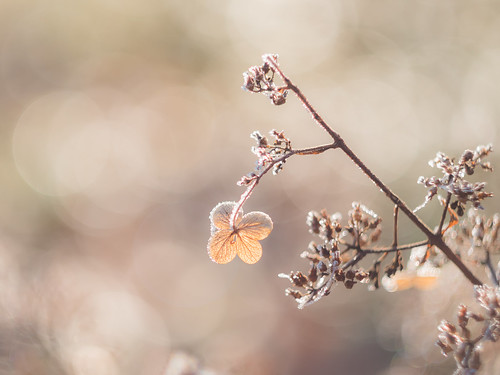 A little frost | by A_Peach