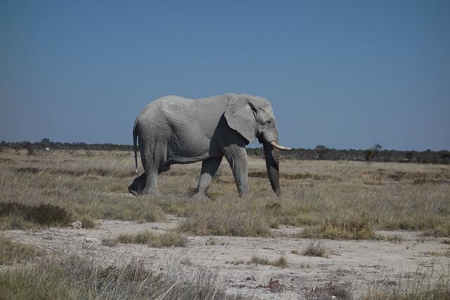 Etosha Park - Okerfontein