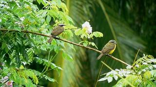 Cahuita - Brids / Costa Rica