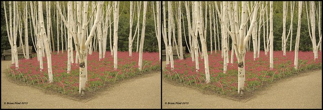 Anglesey Abbey gardens - 3d cross-view