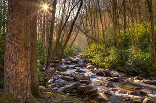 Stream in the Smoky Mtns. | by Phil Horton