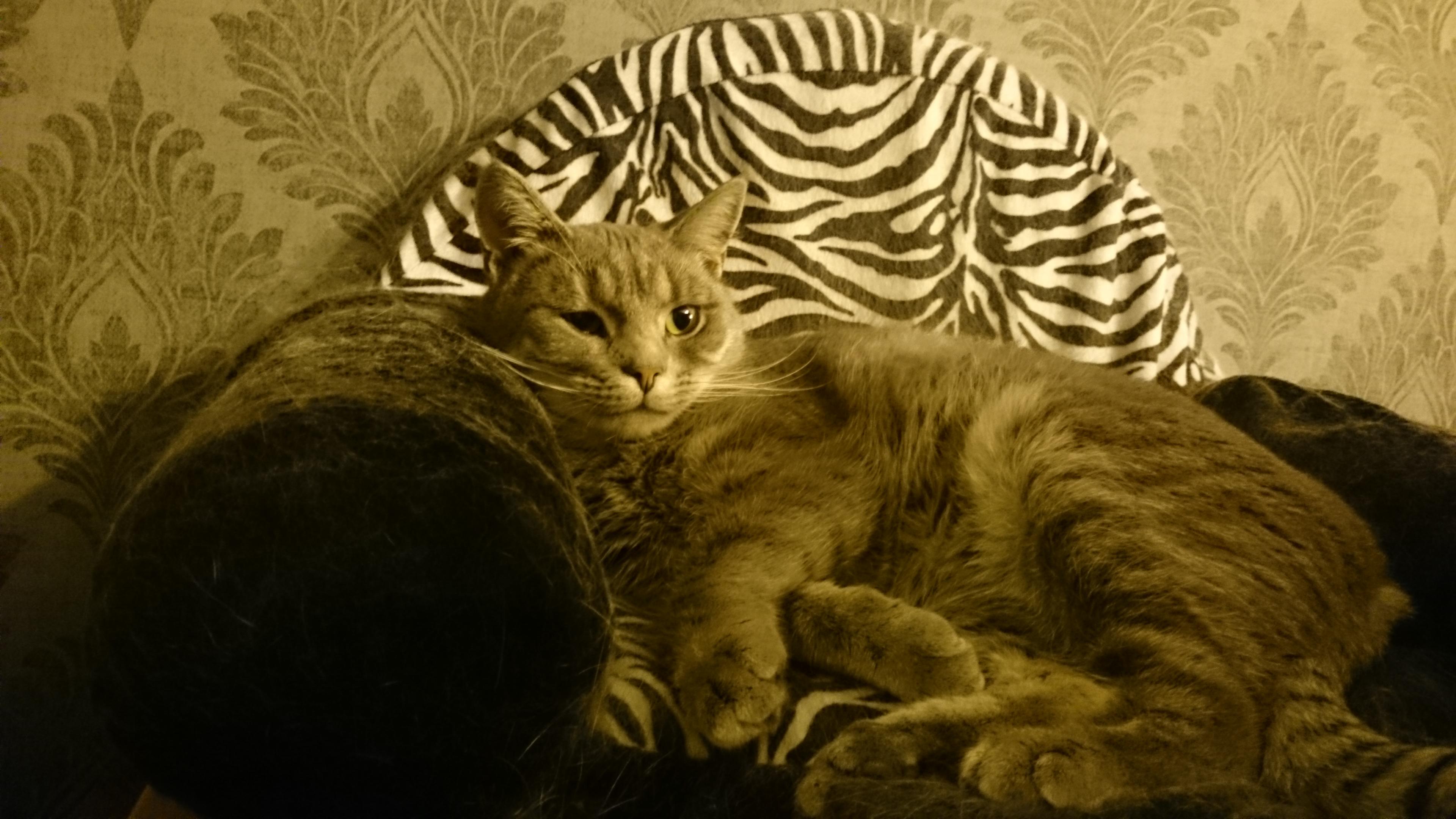 Vincent i kattsoffan
