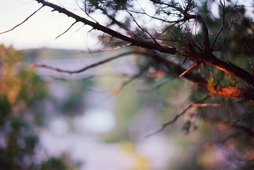 tx kodakektar bullcreek fallcolors sunset pacificimageelectronicsprimefilmxa austin minoltax570 silverfastaistudio8 afternoon mdrokkorx50mmf12 bullcreekgreenbelt atx bokeh usa