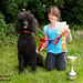 Winners at the Novelty Dog Show 2012