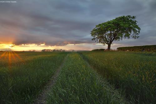 sunset tree field clouds scotland fife availablelight farming hedge crop ze culross canoneos5dmkii distagont2821 gallowsloan distagon2128ze