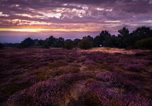 longexposure flowers sunset summer sky night canon landscape suffolk purple cloudy heather norfolk lilac heath fen ling emotive atmospheric eastanglia evocative wortham 1740mmf4lusm