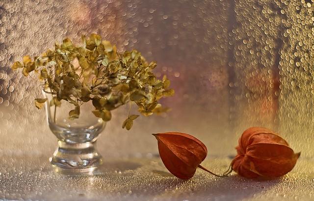 IMG_2826.jpg---hélios-40-2-85mm-1,5---amour-en-cage-et-hortensia--web