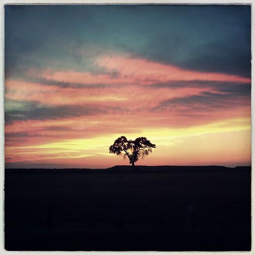 sunset silhouette landscape solotree wonderlens iphoneography hipstamatic purehipstamatic robustafilm jjhipstamaticcombothursday