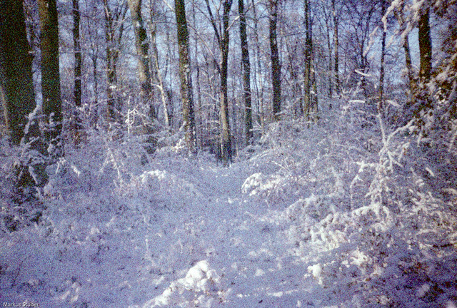 wintery forest on expired film