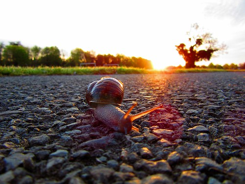 park ireland dublin sun tree nature tarmac closeup sunrise snail creepy catching ugly slug rays slime slowly linear feelers jacko fingal codublin