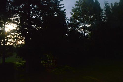 treesilhouette nikon titus d3200 bomet ochieng abbraxx kerichocounty