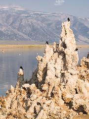 Mono Lake-black birds