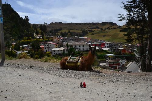 ecuador llama tourdumonde salinasdeguaranda