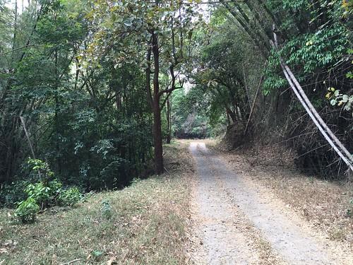 india forest kerala views in silentvalleynationalpark