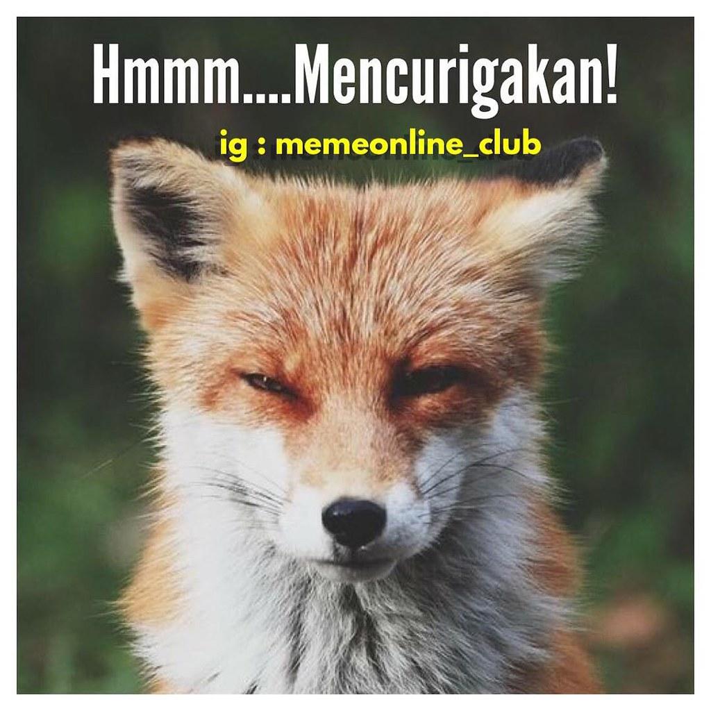 Hmm Mencurigakan Rubah Fox Mozilla Lawak Kocak Humor