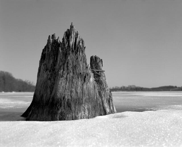 pelican lake stump