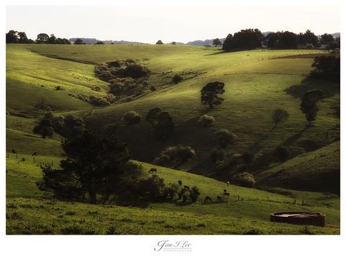 hills greenhills dorrigo hillsview olympus75mmf18 olympusem1
