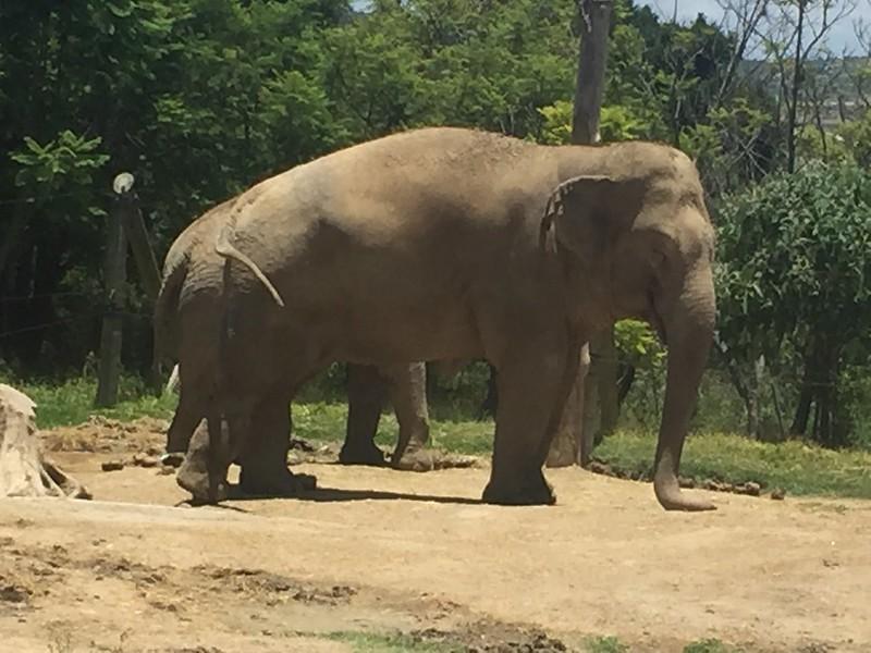 Elefante Africam Safari