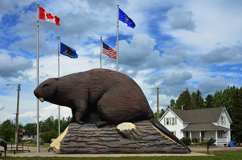 summer canada june giant beaver alberta beaverlodge 6月 2015 六月 カナダ minazuki 水無月 アルバータ州 rokugatsu monthofwater 平成27年