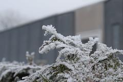winter-2017-16