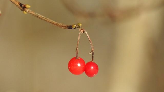 Winter fruits.