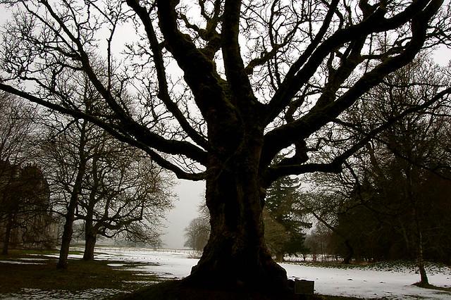 tree at Leith Hall