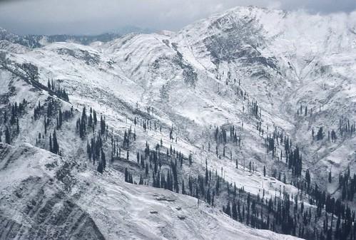 trees india mountain snow landscape kashmir friendlychallenges