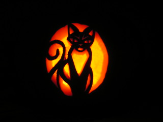 Pumpkin Cat | by bojsen