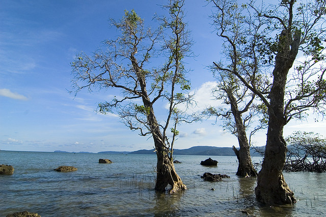 Seas and Trees of Andamans.