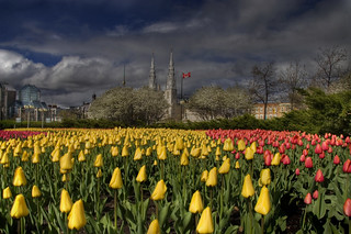 Tulip mania strikes the nation's capital | by IrenaS