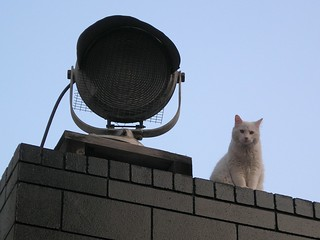 Roof kitty | by Dano