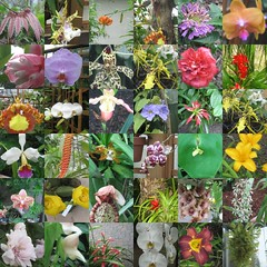 Flower collage | by RahulG.