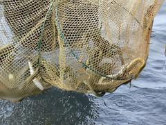 Pesca amb gànguil | by joseptorta
