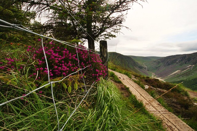 Flower, Fence, Path - HFF
