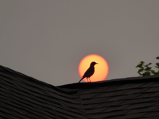 Bird Sun Silhouette_P1080951