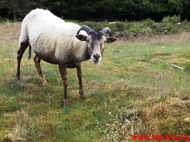 2015-06-27 F.K.C. 't Gooi Wandeltocht 36.4 km (46)