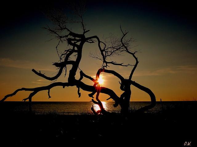 Bizarre Äste im Sonnenuntergang
