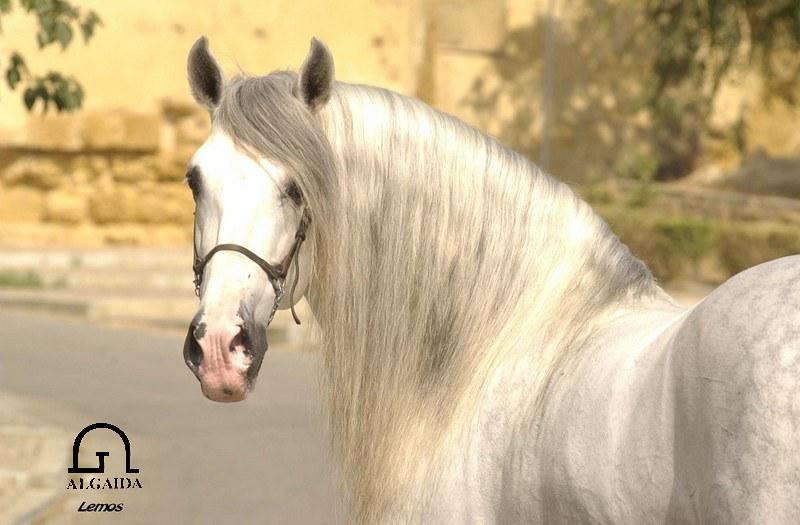 アンダルシア馬 - Horse Scanner