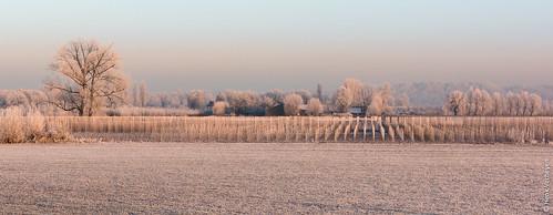 mist zon buiten fog forst landscape landschap outdoor rijp sunrise vorst winter zonsopkomst heteren gelderland nederland nl