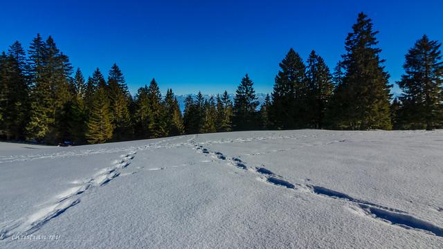 Paysage hivernal du Jura (Switzerland)